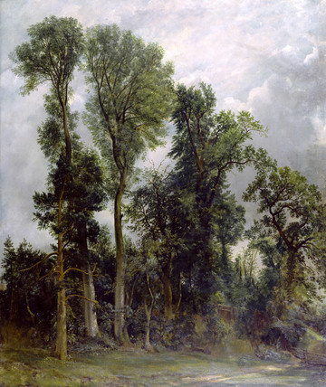 Trees at Hampstead, by John Constable