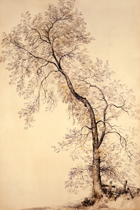 An Ash Tree, by John Constable
