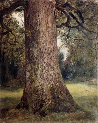Study of the Trunk of an Elm Tree, by John Constable
