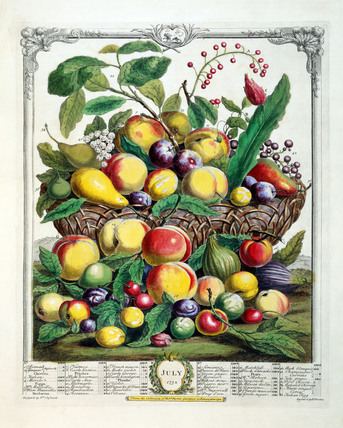 July, The Twelve Months of Fruits