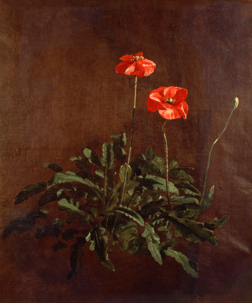 Study of Poppies, by John Constable