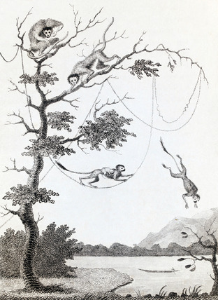 The Mecco and Kishee Kishee Monkeys, by William Blake