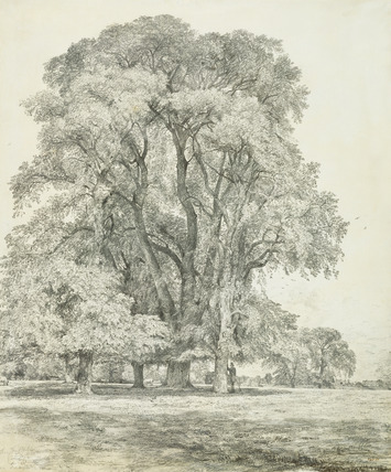 Elm Trees in Old Hall Park, by John Constable