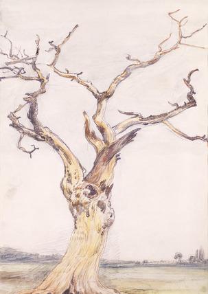 Oak in Deadham Meadows, by John Constable