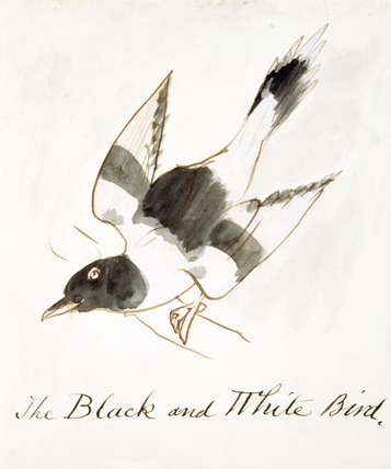 The Black and White Bird