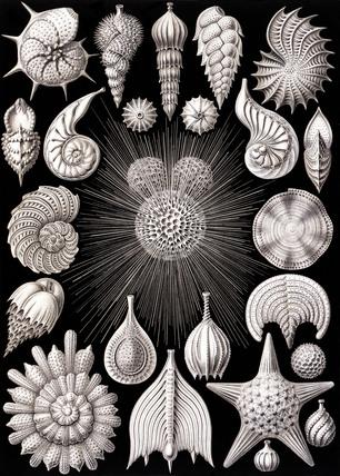 Thalamophora, Kunstform der Natur