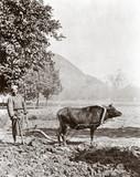 The garden plough, China, 1864-1872.