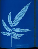 Cyanotype of the Adiantum serrulatum fern, 1853.