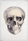 'Head on its Anterior Face', c 1815-1859.