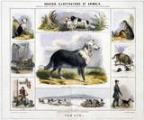 'The Dog', c 1845.