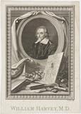 William Harvey, English physician, 17th century.