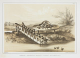 'Chinese Irrigating Machine Worked by a Buffalo', c 1853-1854.