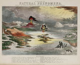 'Diagram of Natural Phenomena', c 1850's.