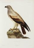 Falcon, Algeria, 1840-1842.