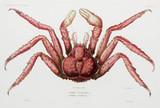 Crab, 1837-1840.