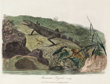 'Muricated Lizard', 1789.