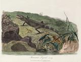 'Muricated Lizard', 1789.