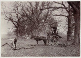 Fallen branches, c 1890.