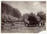 Haymaking, c 1890