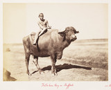 'Fellaheen Boy on Buffalo', 1882.