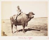 'Fellaheen Boy on Buffalo', 1882.