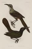 Two birds, 1838-1842.