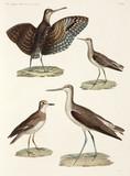Four birds, Egypt, 1798.