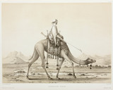 Nomani dromedary, Egypt, 1830-1831.