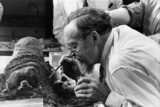 Egyptologist examining the remains of a mummy, 12 June 1975.