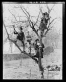 'Children In Tree', 1898.