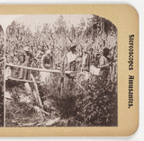 Cutting Sugar Cane', about 1900.