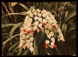 Flowers, c 1940.