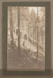 'The wood on the hillside', c 1901.