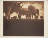 'Ochsen Gespann', 1928.
