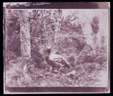 Pheasant, 1852.