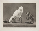 'Cats', 1897.