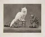 'Cats', 1897.