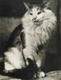 The Cat, 1916.