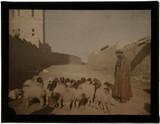 'Shepherd and Sheep, Jerusalem'.