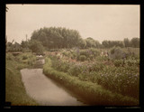 """'Mr Lee Mill's Garden, Wickhamford, England', c 1913."""