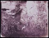 Heron, c 1856.