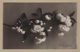 'Cherry', c 1905.