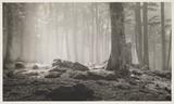 'Forest de Gabas', 1938.