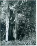 Cherry Kearton in a photographic hide, 1899.