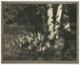 Woodland scene, 1905.
