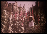 Girl in a garden with hollyhocks, 1908.