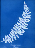 Cyanotype of Aspidium lobatium, 1853.