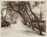 View of a road with bullock carts, Ceylon, c 1870.