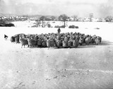 Herding sheep in a snow-covered field, 27 January 1935.