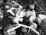 Snails, March 1984.